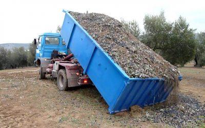 Nuevo servicio de recogida y transporte de aceituna en Los Pedroches